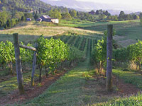 MountainRose Vineyard's Russell County Vineyard